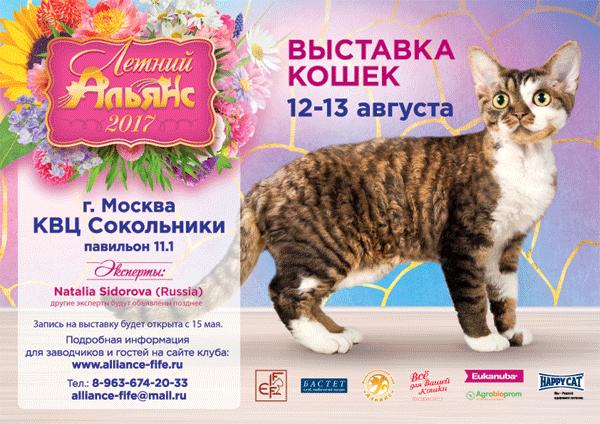 Клуб кошек москва альянс ночной клуб би в москве