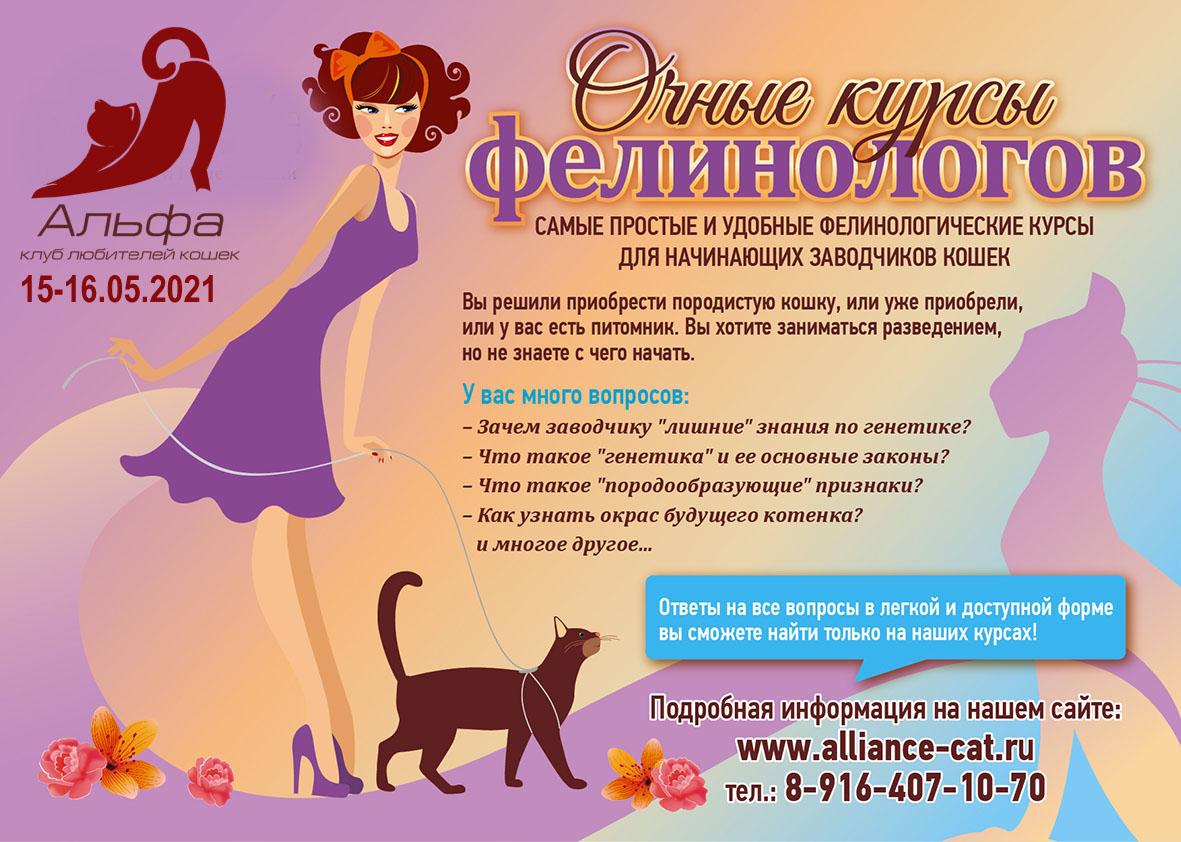 Астра клк клуб кошек москва эротическая шоу программа на тв